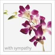 Sympathy - Pink Orchids