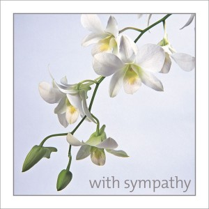Sympathy - White Orchids