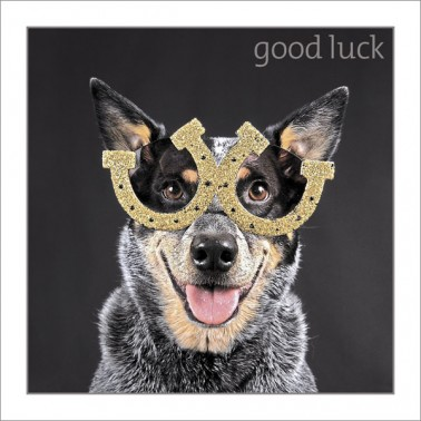 Good Luck - Dog