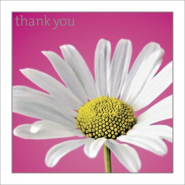 Thank You - Daisy