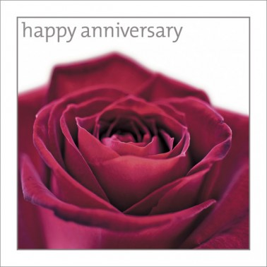 Anniversary - Red Rose