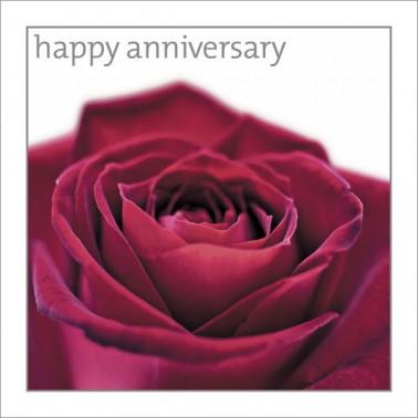 Anniversary - Red Rose