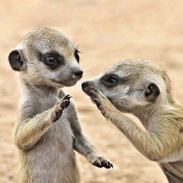 Pssst!