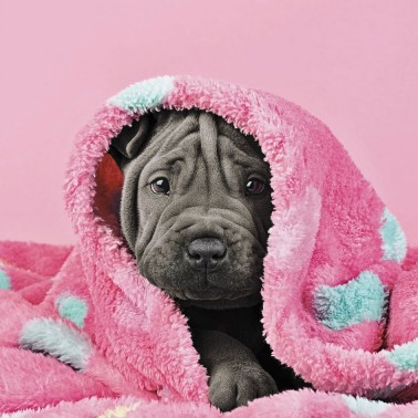 Snuggly Puppy