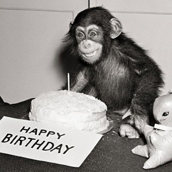 Happy Birthday Chimp