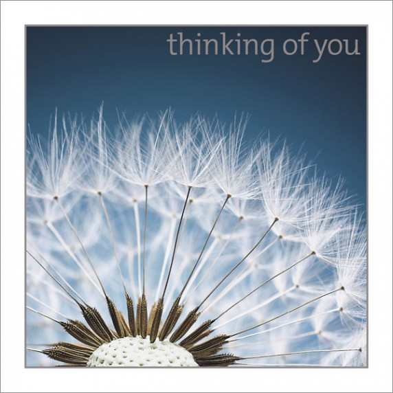 Thinking of You - Dandelion