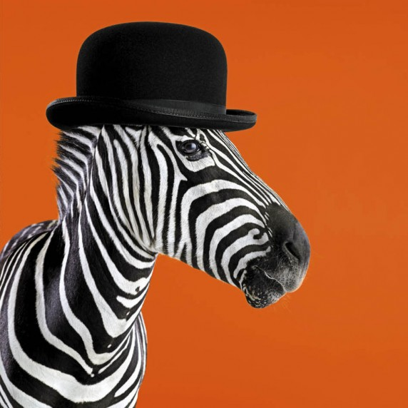 Clockwork Zebra
