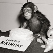 Happy Birthday Chimp