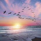 Love Birds - Anniversary