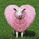 Sheepheart