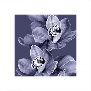 Mauve Orchid 2